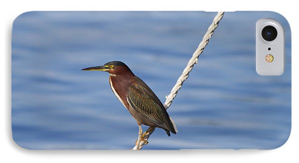 Green Back Heron IPhone Case by Kim Hojnacki