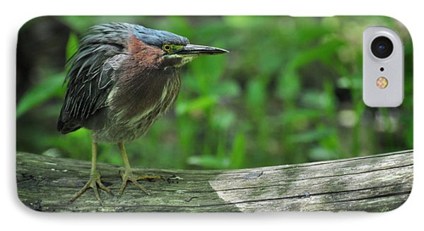 Green Backed Heron At The Swamp IPhone Case by Rebecca Sherman