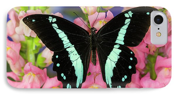 Green-banded Swallowtail Or African IPhone Case by Darrell Gulin