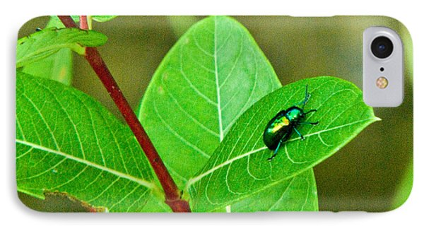 Green Beetle Foraging IPhone Case by Douglas Barnett