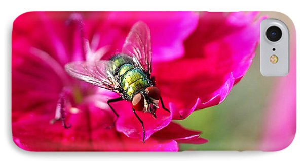 Green Bottle Fly On Dianthus  IPhone Case by Rona Black