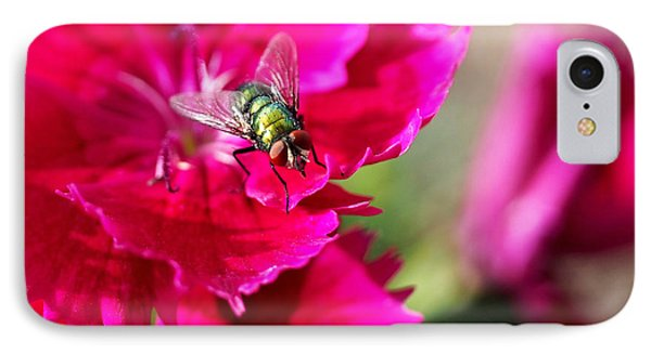 Green Bottle Fly On Dianthus  IPhone 7 Case