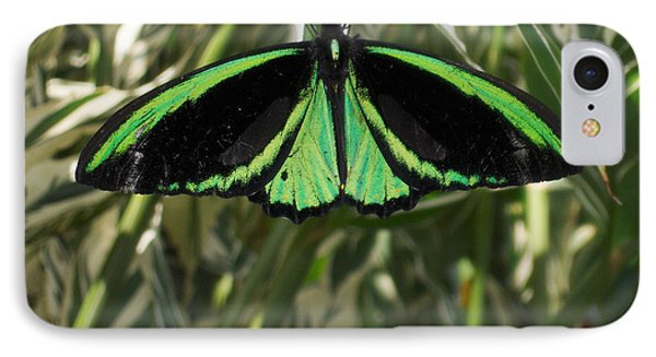 IPhone Case featuring the photograph Green Butterfly by Brenda Brown