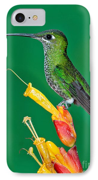 Green-crowned Brilliant Phone Case by Anthony Mercieca