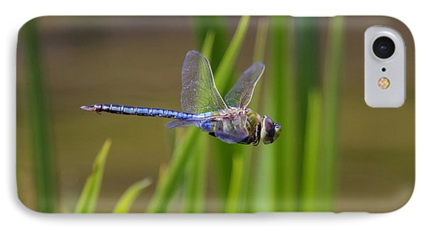 Green Darner Flight IPhone Case by David Lester