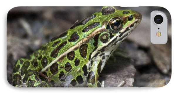 IPhone Case featuring the photograph Green Frog by Timothy McIntyre