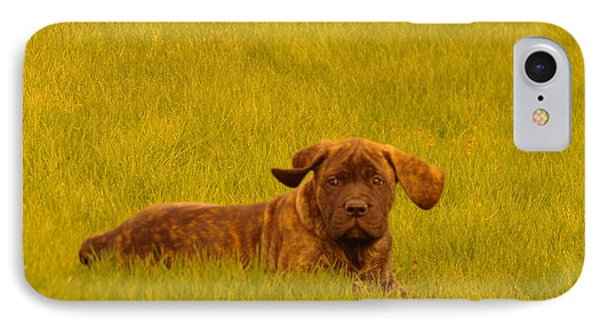 Green Grass And Floppy Ears Phone Case by Jeff Swan
