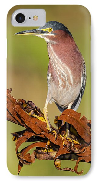 Green Heron Phone Case by Andres Leon