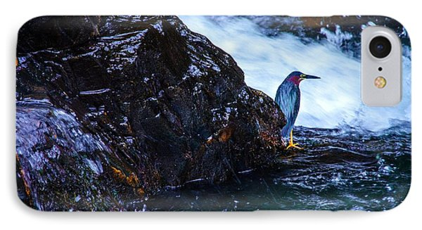 Green Heron Blue During Mating IPhone Case by Lori Miller