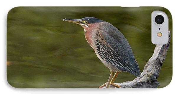 Green Heron IPhone Case by Doug Herr