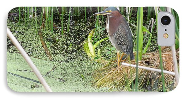 IPhone Case featuring the pyrography Green Heron by Ron Davidson