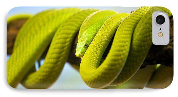 Green Mamba Coiled Up On A Branch IPhone Case by Artur Bogacki