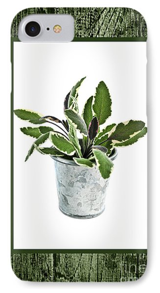 Green Sage Herb In Small Pot IPhone Case by Elena Elisseeva