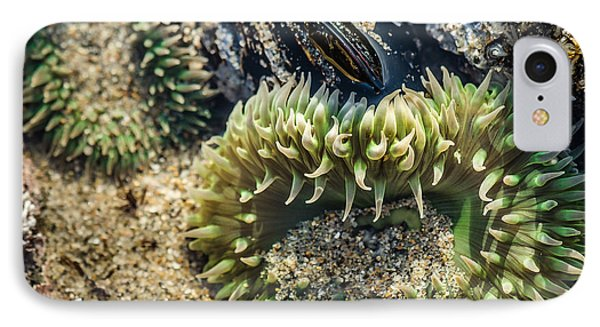 Green Sea Anemone IPhone Case by Linda Villers