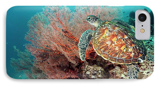 Green Sea Turtle And Gorgonian IPhone Case by Georgette Douwma