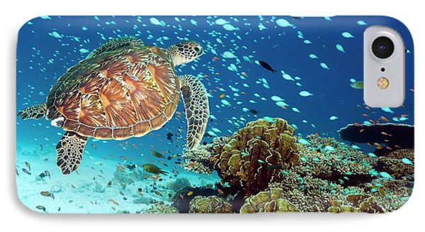 Green Sea Turtle And Reef Fish IPhone Case by Georgette Douwma