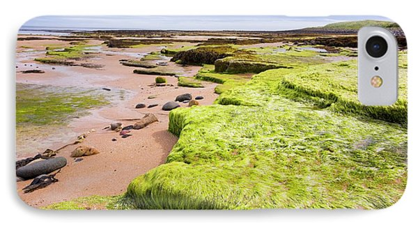 Green Sea Weed On Seahouses Beach IPhone Case