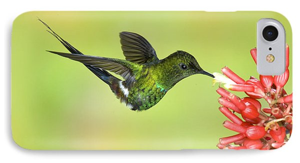 Green Thorntail Hummingbird Phone Case by Anthony Mercieca