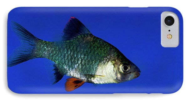 Green Tiger Barb IPhone Case by Nigel Downer