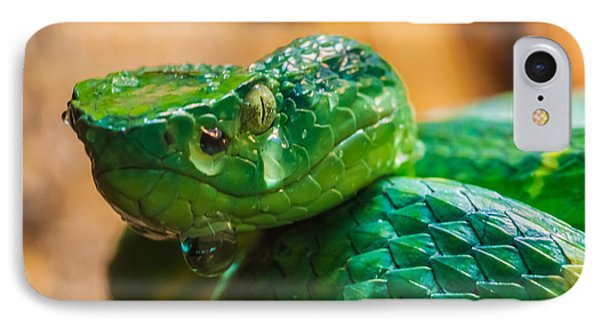 Green Tree Pit Viper Phone Case by Craig Lapsley