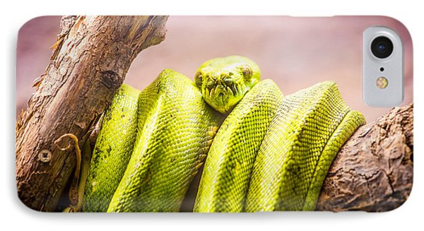 Green Tree Python IPhone Case by Pati Photography