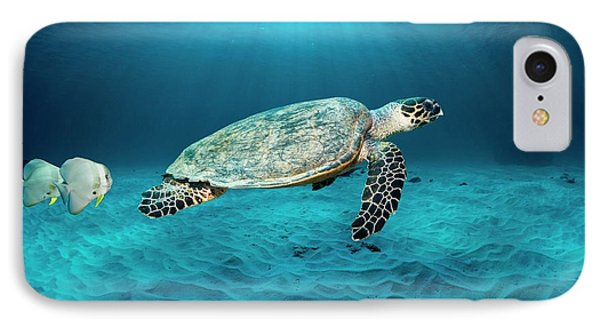 Green Turtle And Circular Spadefish IPhone Case by Georgette Douwma