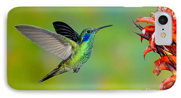Green Violet-ear Hummingbird Phone Case by Anthony Mercieca