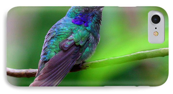 Green Violet Ear Hummingbird IPhone Case by Myrna Bradshaw