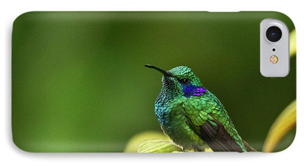 Green Violetear Hummingbird IPhone Case by Heiko Koehrer-Wagner