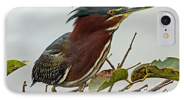 Audubon's Green Heron IPhone Case