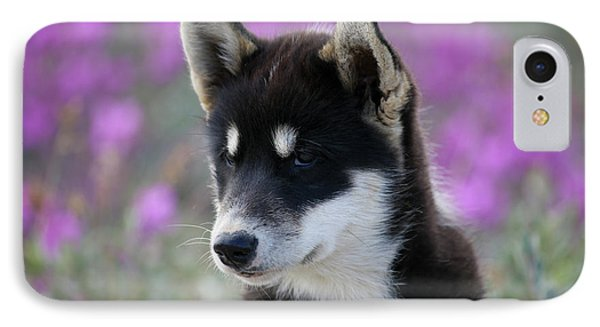 Greenland, Sisimiut, Young Husky Dog IPhone Case by Aliscia Young
