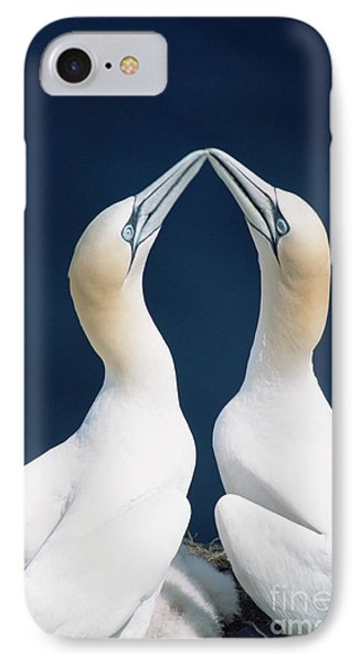 Boobies iPhone 7 Case - Greeting Gannets Canada by Yva Momatiuk John Eastcott