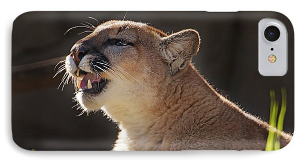 Greeting The Morning Light  IPhone Case by Brian Cross
