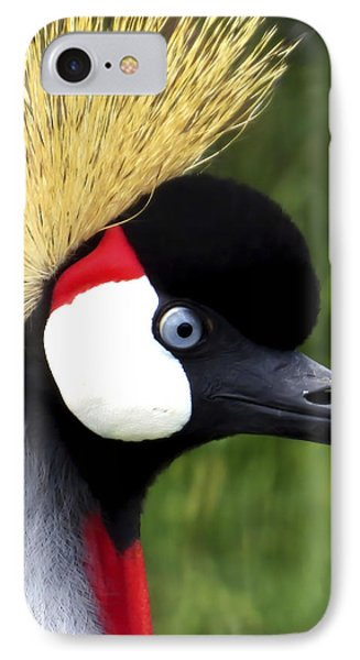 Grey Crowned Crane IPhone Case by Ron Grafe