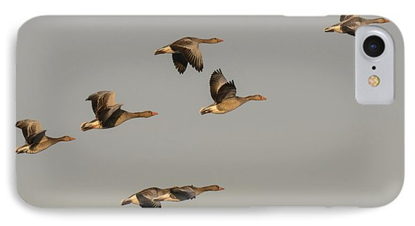 Grey Geese IPhone Case by Michael Mogensen