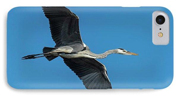 Grey Heron In Flight IPhone Case by Tony Camacho