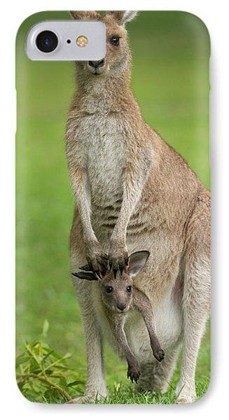 Kangaroo iPhone 7 Case - Grey Kangaroo And Joey  by Yva Momatiuk John Eastcott
