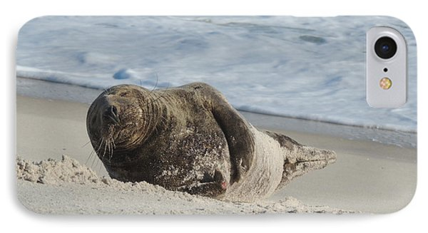 Grey Seal Pup On Beach Phone Case by Kimberly Perry
