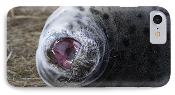 Grey Seal Pup Yawning IPhone Case