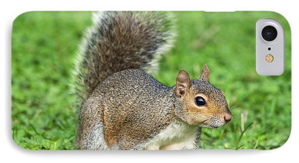 IPhone Case featuring the photograph Grey Squirrel by Antonio Scarpi