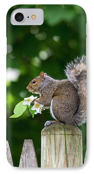 Grey Squirrel IPhone Case by Babak Tafreshi