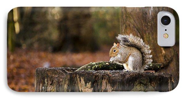 Grey Squirrel On A Stump IPhone Case