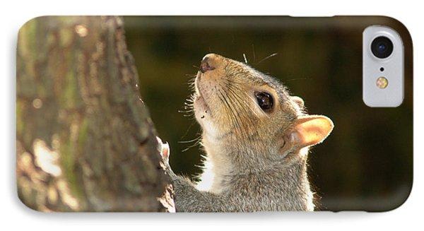 Grey Squirrel IPhone Case by Ron Harpham