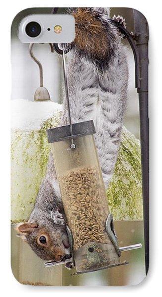 Grey Squirrel (sciurus Carolinensis) IPhone Case by Ashley Cooper