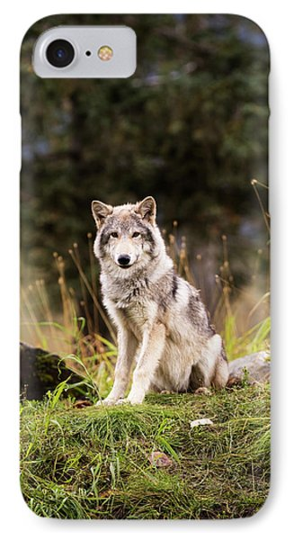 Grey Wolf  Canis Lupus  Pup Roams It S IPhone 7 Case by Doug Lindstrand