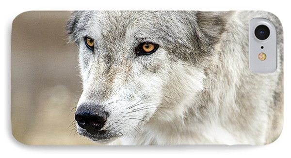 IPhone Case featuring the photograph Grey Wolf Eyes by Yeates Photography