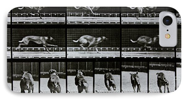 Greyhound Running IPhone Case by Eadweard Muybridge