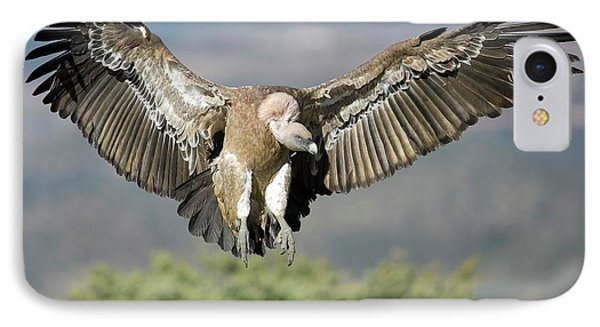 Griffon iPhone 7 Case - Griffon Vulture Flying by Nicolas Reusens