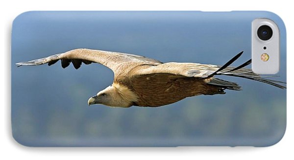 Griffon Vulture In Flight IPhone 7 Case by Bildagentur-online/mcphoto-schaef