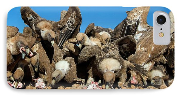 Griffon Vultures Feeding IPhone 7 Case by Nicolas Reusens